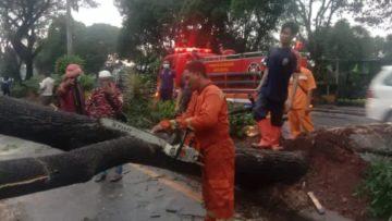 Pohon jalan juanda tumbang